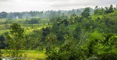 Jati Luwih, Rice terraces, Bali