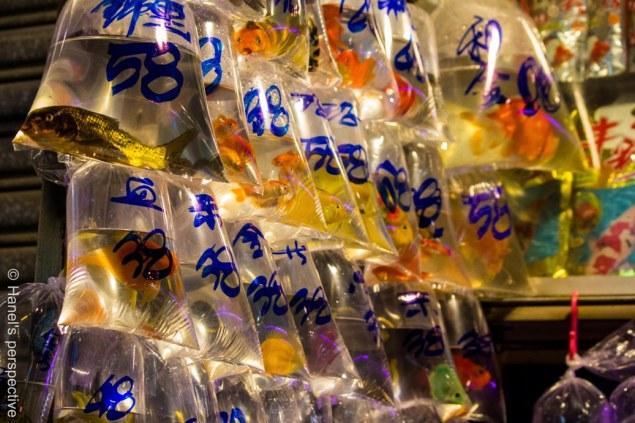 Gold Fish market, HongKong