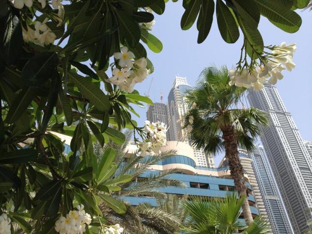 Le Meridian from Garden, Dubai