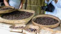 kopi Luwak Beans, roasted