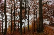 Wald, Uetliberg